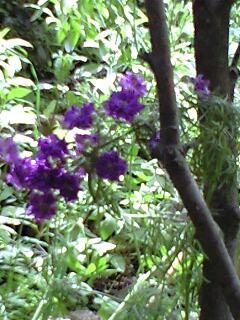 憩いの庭の花たち