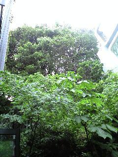雨の庭でランチ