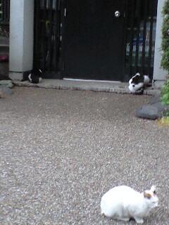 """5/12(月)加藤崇之""""FIS""""LIVE @入谷浅草なってるハウス"""
