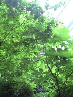 今日も今日とて、曇り空の庭