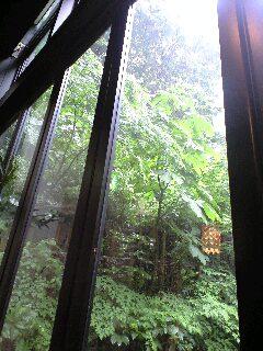 ガラス越し、雨の庭