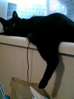 迷子のインコのニュースと元捨て猫