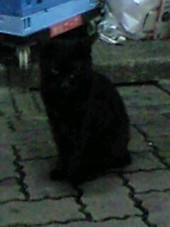 子猫見たさに歌舞伎町