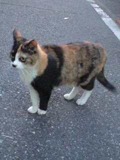 こんなデザイン猫がいた