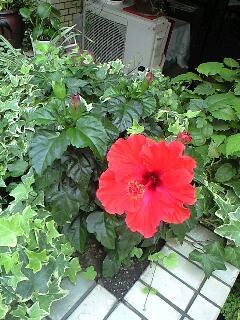 夏の花から August Rush までの1日