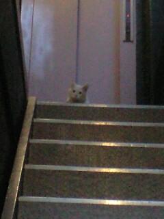 Lovelyのすぐ横で猫に会う