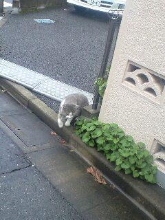 今朝、ボス猫に会う