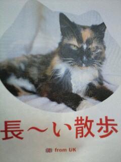 散歩してたら9年経ってた猫ディクシー