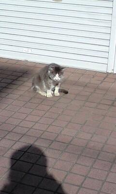 ボス猫 健在!