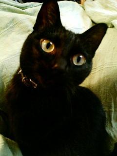 2・22(ニャン・ニャンニャン) 猫の日