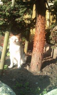神宮前のすみれと猫