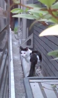 杜若と牡猫