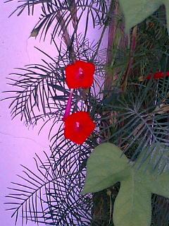 晩夏 想い出の花たち