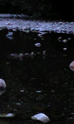 小魚と鴨の親子