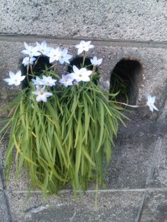 春立ち曇り歩く 3月11日〜28日