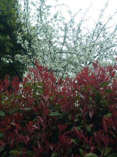 朝の花散歩