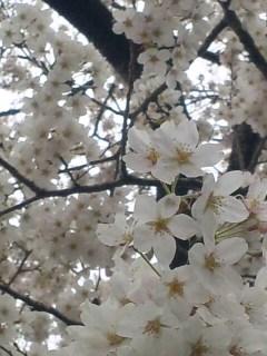 朝の花散歩 2