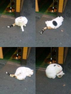 招き猫チョンタ(仮名)くん