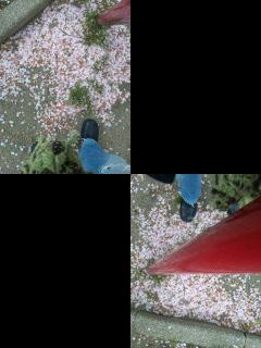 花散歩 4.11