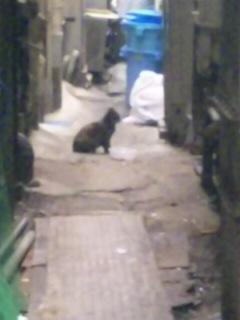 元気だったよ歌舞伎町の黒猫