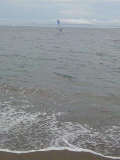 海は広いな優しいな
