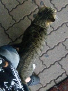 僕は招き入れ猫