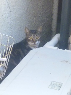 こないだお見かけした猫さん
