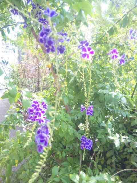 紫色の小花