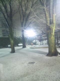 雪 積もってる!