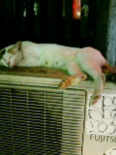 涼む母猫 … 有楽町