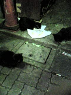 歌舞伎町の黒猫