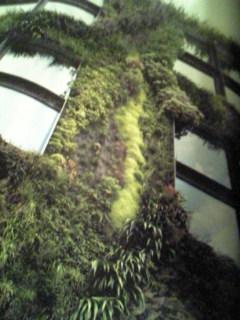 緑をまとった美術館