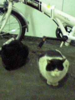 有楽町駅前に猫が!