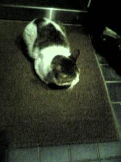 ゴロンゴロン猫